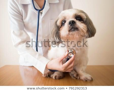 veterinário · enfermeira · animais · mulher · médico · mulheres - foto stock © photography33
