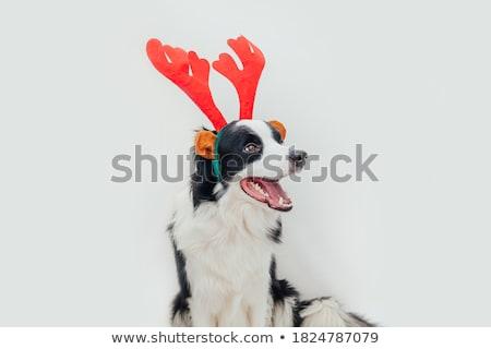 Foto stock: Cute · cachorro · Navidad · sombrero · vacaciones