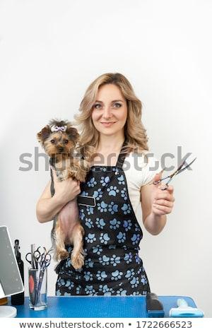 animal · fourrures · brosse · peigne · blanche · animaux - photo stock © FOKA