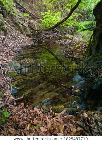 fiume · fondo · view · rocce · acqua - foto d'archivio © goce