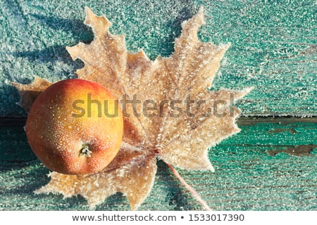 the first frosts stock photo © naumoid