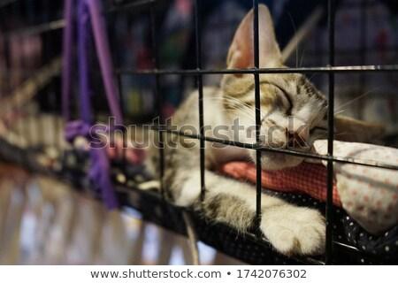 Adormecido gato gaiola estoque foto caixa Foto stock © punsayaporn