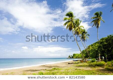la · Grenada · boom · landschap · zee · zomer - stockfoto © phbcz