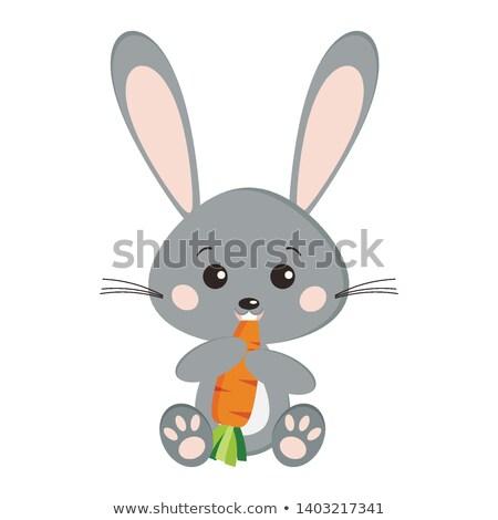 Grappig cartoon grijs konijn eten vers Stockfoto © anbuch