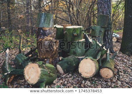 Stock photo: Pile of wood logs in the garden