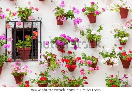 красивой · окна · стены · украшенный · цветы · старые - Сток-фото © taiga