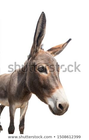 頭 エルサレム ロバ 農民 動物 ストックフォト © rhamm