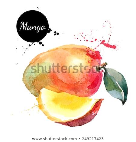 vízfesték · mangó · gyümölcs · absztrakt · terv · fehér - stock fotó © suriya_aof9
