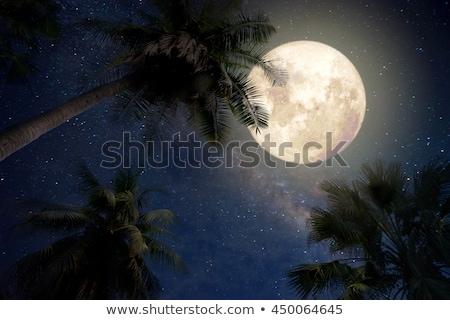 Mar playa árbol fantástico puesta de sol agua Foto stock © alinamd