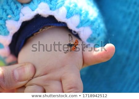 katicabogár · kéz · fű · tájkép · szépség · nyár - stock fotó © ongap