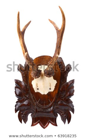 isolated roebuck hunting trophy Stock photo © taviphoto