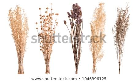 Rood drogen bloemen home decoratie Stockfoto © wime