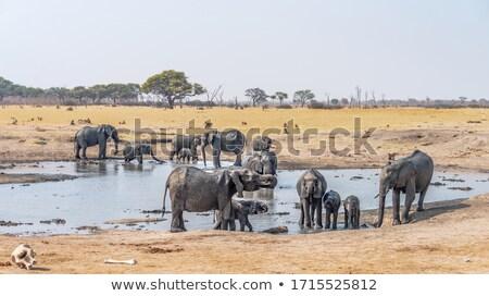 Elephant at Waterhole stock photo © JFJacobsz