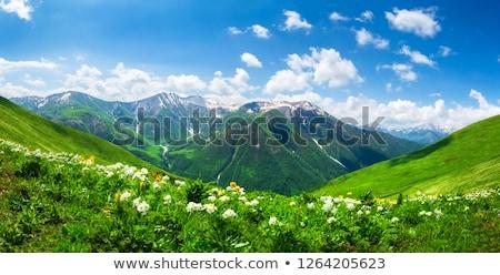 Kaukázus hegyek Grúzia napos idő felhők fű Stock fotó © Taigi
