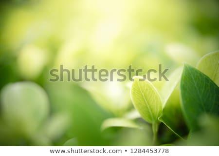 весны зеленая трава пространстве текста иллюстрация природы Сток-фото © smeagorl