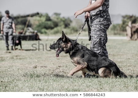 opleiding · aanval · hond · politie - stockfoto © tony4urban