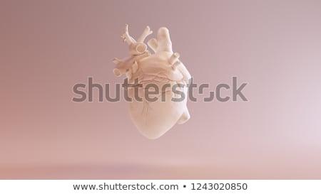 isolated shiny heart on white background stock photo © zarost