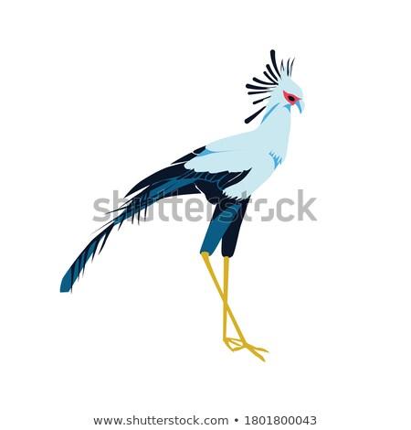 Secretarybird or secretary bird in the savannah of Kenya,  Africa Stock photo © master1305
