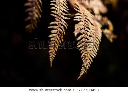Automne paysage fougères forêt rouge beauté Photo stock © Kotenko
