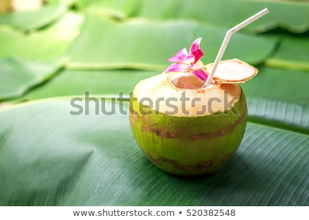 Tropical Coconut Refreshment Stock photo © Kacpura