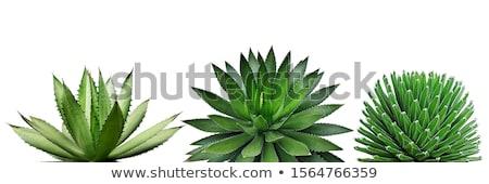 rzadki · roślin · plateau · Wenezuela · charakter · liści - zdjęcia stock © klinker