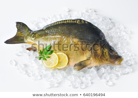 Isolated Fresh Carp Stock photo © alrisha