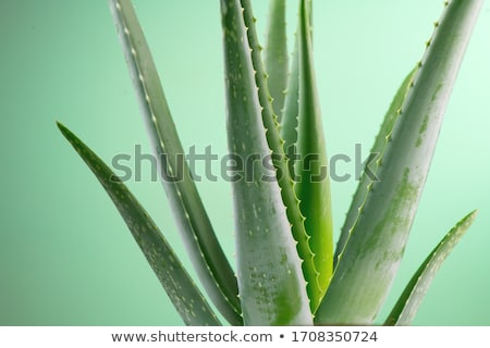 Alternative medicine concept Stock photo © grafvision