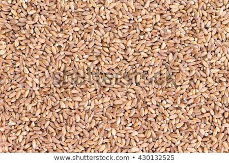 Background texture of pearled farro wheat Stock photo © ozgur