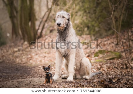 small Black dog stock photo © Klinker