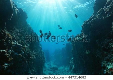 Denizaltı ada örnek manzara arka plan sanat Stok fotoğraf © bluering