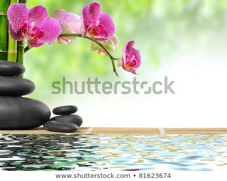 Zen bazalt taşlar beyaz krizantem siyah Stok fotoğraf © Lana_M
