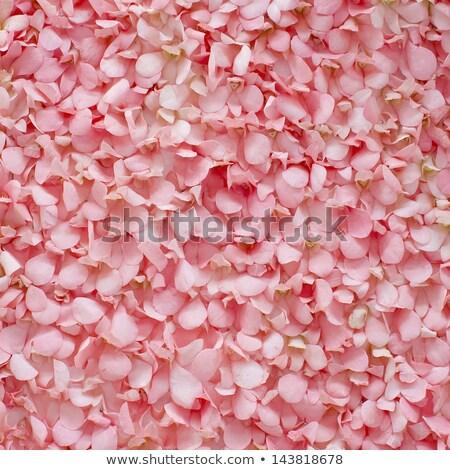 A multi-petal flower Stock photo © bluering