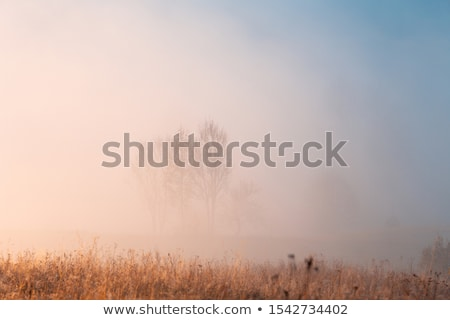 mountain village in a misty morning stock photo © bbbar