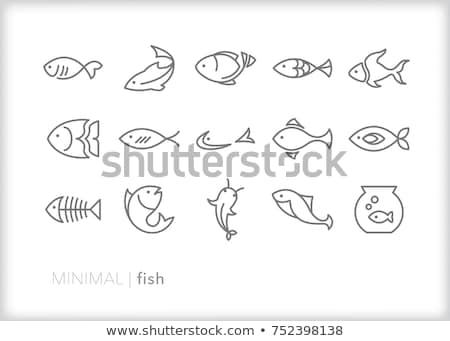 ryb · czaszki · czarny · sylwetka · zwierząt - zdjęcia stock © rastudio