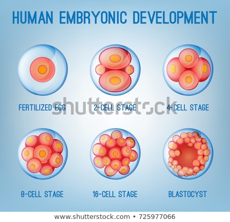 Ovum fertilization blue background Stock photo © Tefi