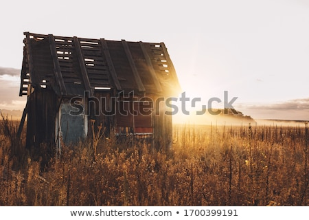 Early evening landscape with fog stock photo © ondrej83