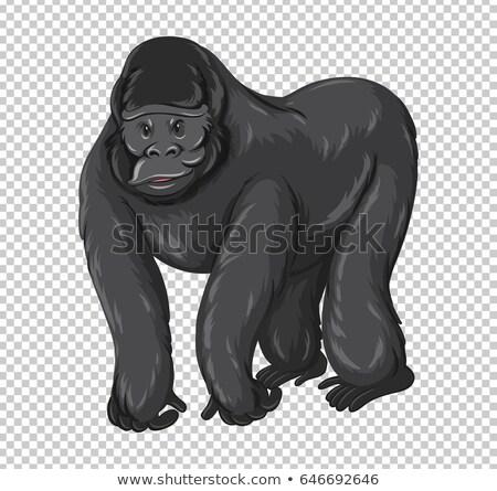 Wild gorilla transparant illustratie natuur achtergrond Stockfoto © bluering
