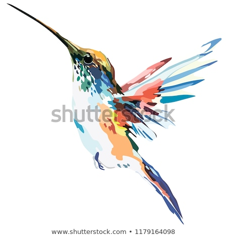Piękna papuga kolorowy skrzydełka ilustracja charakter Zdjęcia stock © bluering
