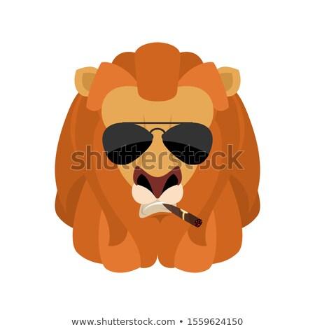 lion cool serious avatar of emotions wild animal smoking cigar stock photo © popaukropa