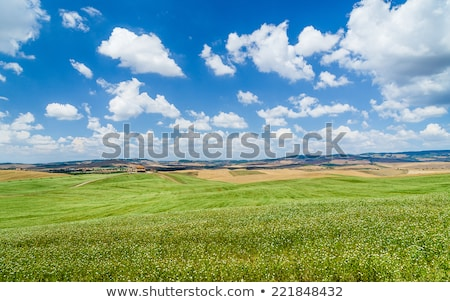 Tree in green hilly field with blue sky Stock photo © IS2