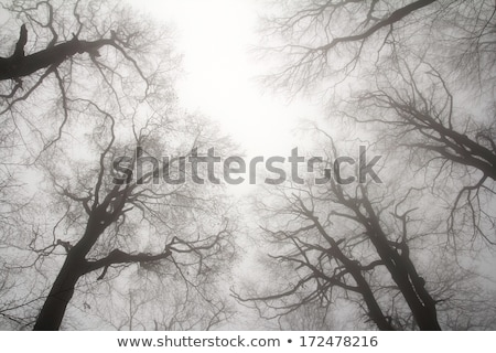 Bare treetop branches at night Stock photo © stevanovicigor