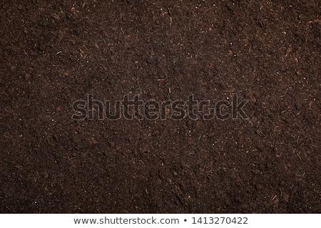fertile · sol · noir · jardin · sol · brut - photo stock © stevanovicigor