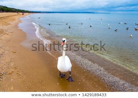 areia · branca · praia · sol · mar · azul - foto stock © neirfy