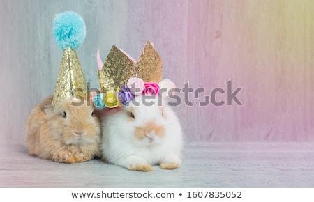 Gelukkige verjaardag poster mooie ingericht hoed kleurrijk Stockfoto © robuart