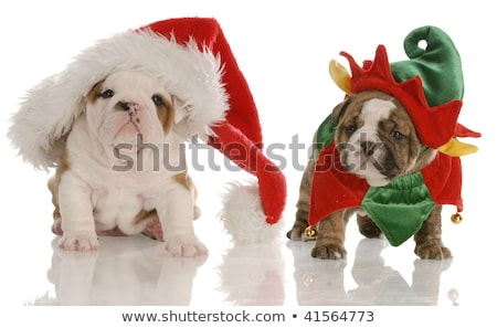 two funny dogs wearing santa claus hats stock photo © feedough