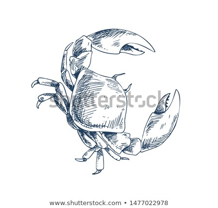 Crab Crustacean Sea Creature Sketch Style Poster Stock photo © robuart