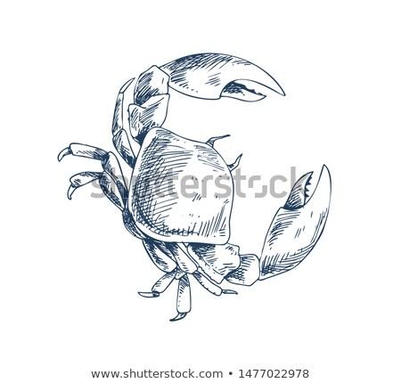crab crustacean sea creature sketch style poster stock photo © robuart