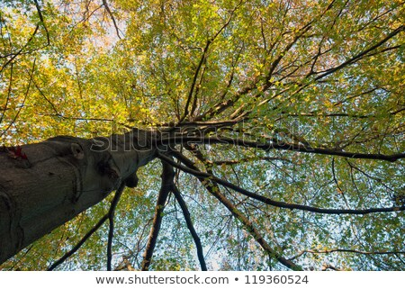 branch of oak tree with red leaves stock photo © vapi