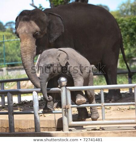 Deux zoo poser alimentaire eau Photo stock © galitskaya