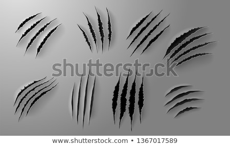 Scratch set. Claws scratching animal scrape track. Vector illustration Stock photo © olehsvetiukha